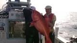 カンナギ132K与那国島「瑞宝丸」超巨大魚編