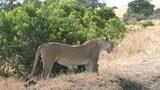 ビバ!アフリカ サバイバルハンティング