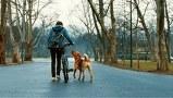 ホワイト・ゴッド 少女と犬の狂詩曲