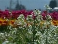 花ごよみ 冬・早春