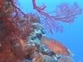 日本百景 美しき日本 亜熱帯の海と珊瑚の楽園